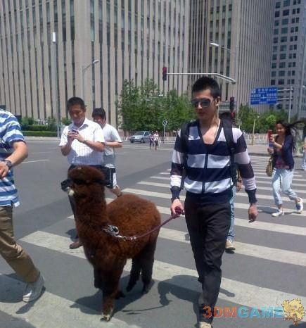 北京三里屯惊现草泥马 霸气神兽在手谁能比!