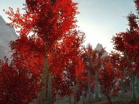 上古卷轴5:天际 天际枫林红叶知秋