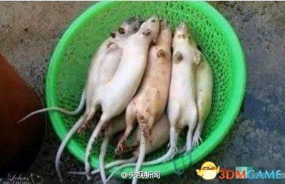 老鼠肉假冒羊肉网友引围观 食品安全究竟谁来管?