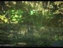 独立游戏最新作品《森林》预告片