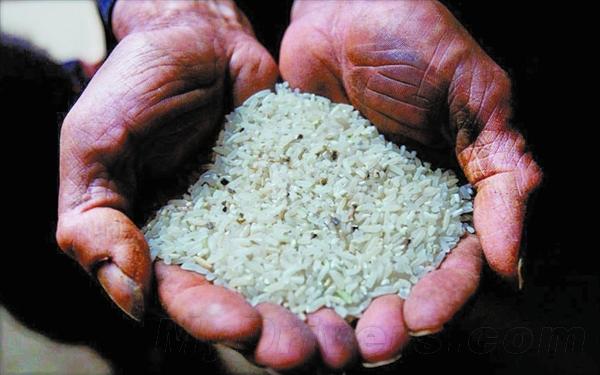 """想要预防""""毒大米"""" 就别总吃一个地方的粮食"""