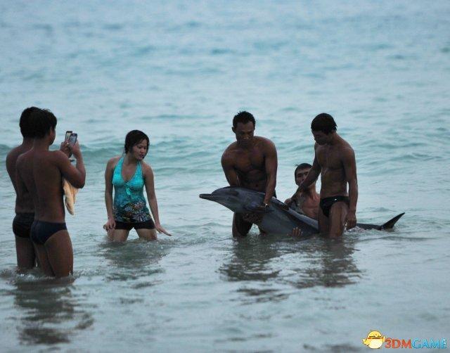 三亚游客坚持与搁浅海豚合影 其因失血过多死亡