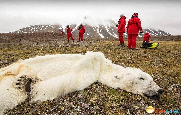 <b>北极熊饿死剩皮包骨头 只因气候变化常食不果腹</b>