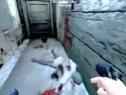 龙霸三合会 游戏基情解说视频 游戏真奇葩