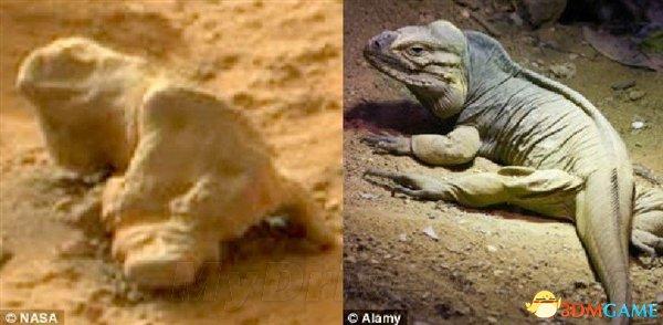 """神奇!美国宇航局公开档案中发现""""火星蜥蜴"""""""