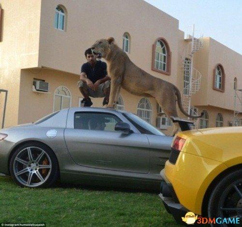 超级富豪们通过晒自己与宠物——狮子或猎豹的照片来,中东阔少炫富的方式无疑显得十分另类