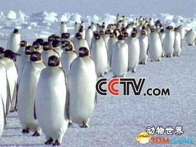 企鹅的逆袭!腾讯和CCTV谁是中国媒体真一哥