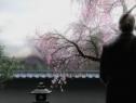 GT评测忍者龙剑传3