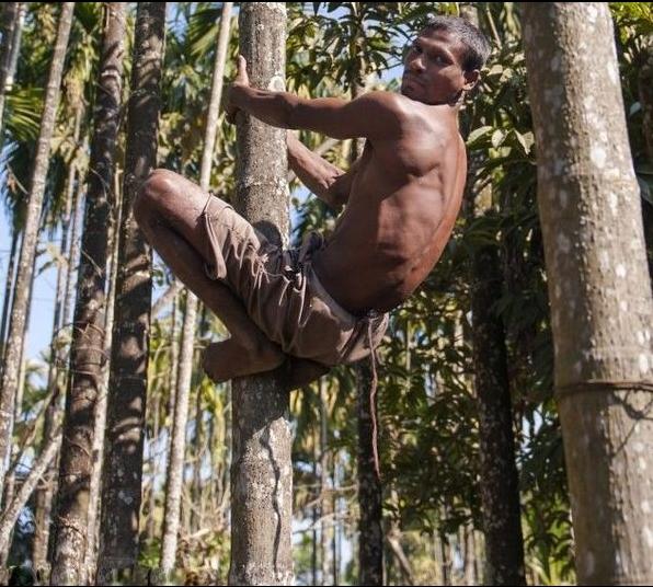 """印度须眉长37厘米尾巴 被本地人奉为""""猴神"""""""