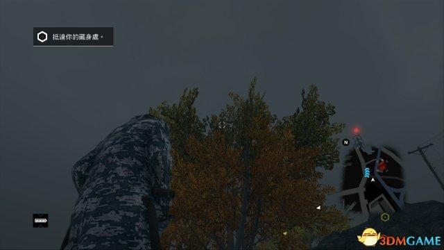 看这翔一般的树叶墙
