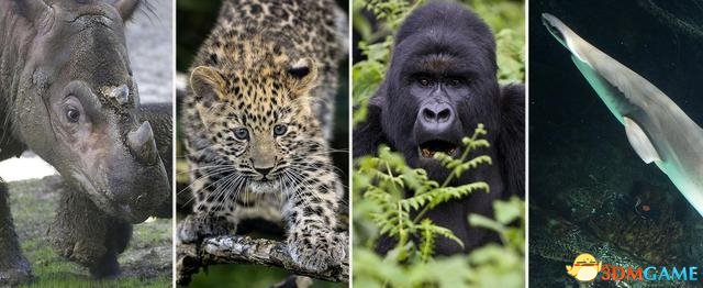 请善待大自然 人类已经行走在第6次大灭绝的边缘