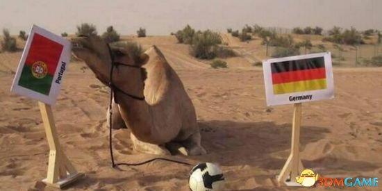 <b>保罗退位!神驼预测4战正确率100% 德国输葡萄牙?</b>