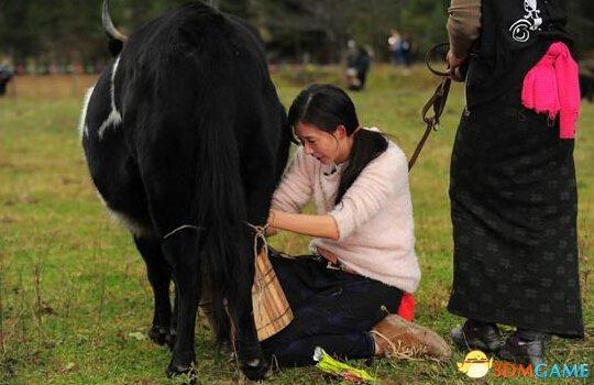 林志玲嫁藏民家庭体验藏家生活 女神秒变农家女