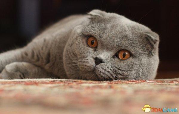 俄罗斯政府穷疯了 税务员收税威胁带走名贵纯种猫