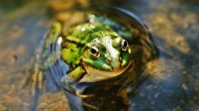 疯狂的青蛙 娱乐实况解说视频 可见过如此傻缺的青蛙