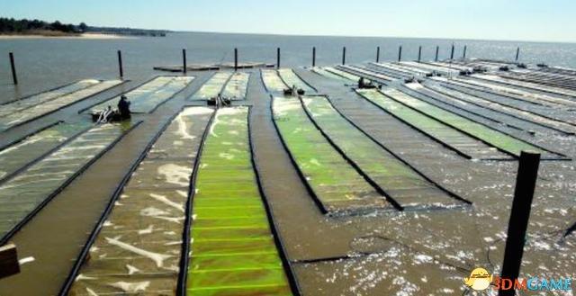 """美帝掌握核心科技 美国公司要将绿藻变成""""石油"""""""