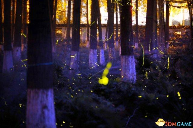 武汉主题公园数万萤火虫引观赏 上万市民竞相观看