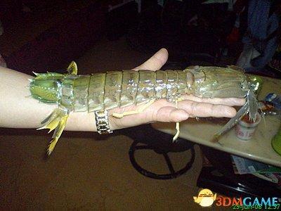 濑尿虾扎破手指险送命 做一个吃货的风险实在太高