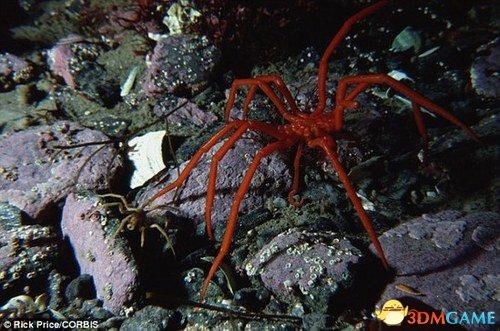 克苏鲁神话《疯狂山脉》的节奏?南极惊现巨型蜘蛛