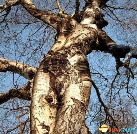 自然造物的威力 那些看上去让人头皮发麻的奇异景物