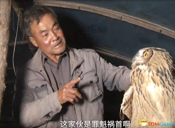 贪吃猫头鹰3闯农户大棚吃23只鹅 被抓现行一脸无辜