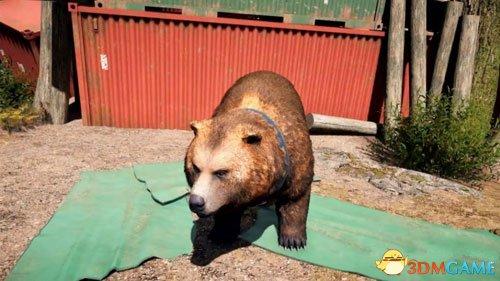 孤岛惊魂5灰熊皮获得方法 如何获得灰熊皮毛