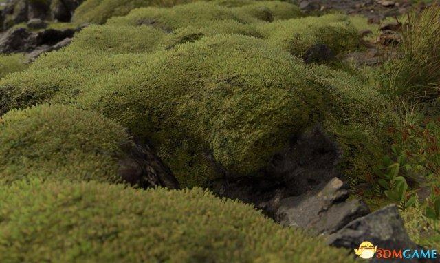 《死亡擱淺》苔蘚照片大猜想 眾多線索指向這地方