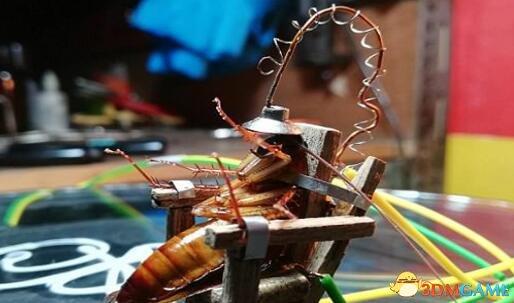 男子自制电椅处死蟑螂遭谴责 回应称:并不后悔