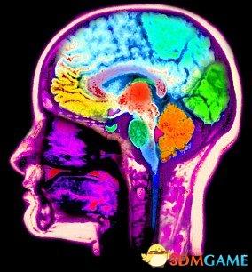 新研究发现,人类大脑形状的关键演化变化发生在大约10万到35000年前