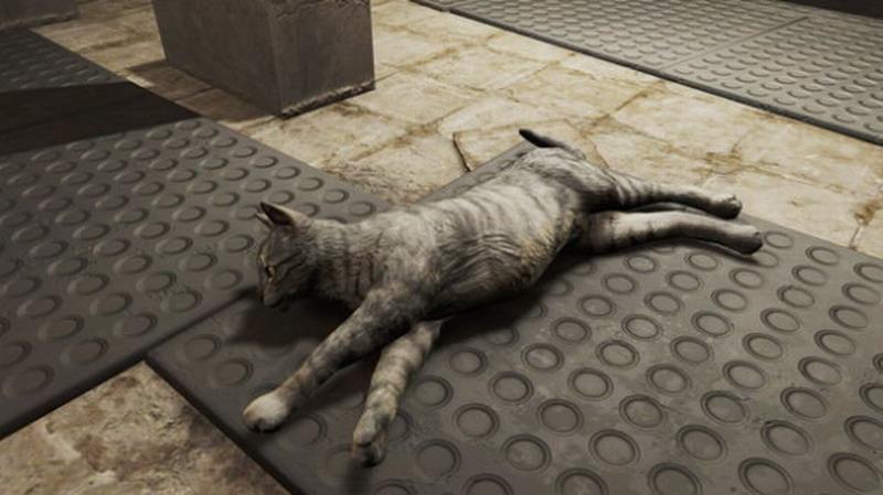 《辐射76》竟然可以吃猫却不能领养 爱猫人士要抗议了