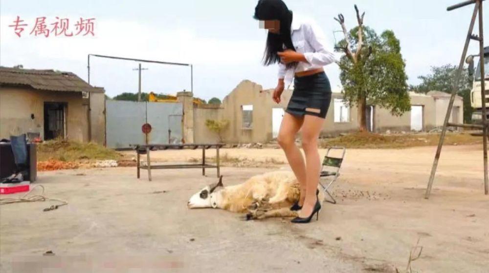 """""""网红""""美女拍虐杀动物视频:定制贩卖成为灰色产业链"""