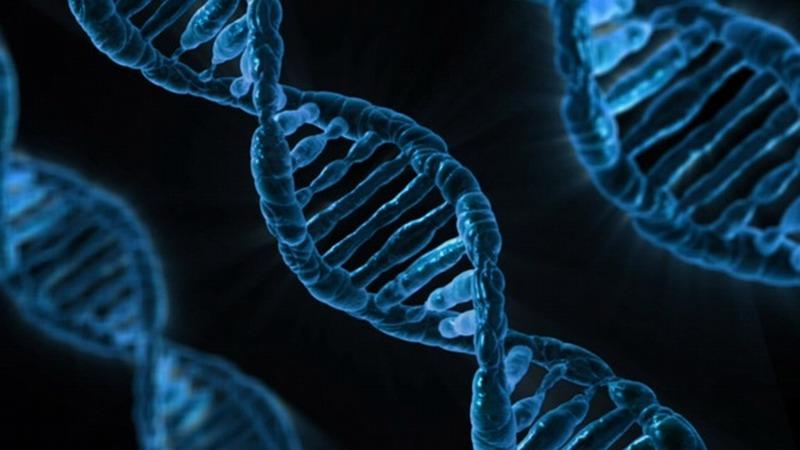 基因编辑婴儿事件发酵 美国莱斯大学要调查该项目教职员