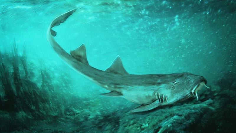 南梦宫神作《小蜜蜂》美版名被冠名超古老鲨鱼种 官方发推祝贺