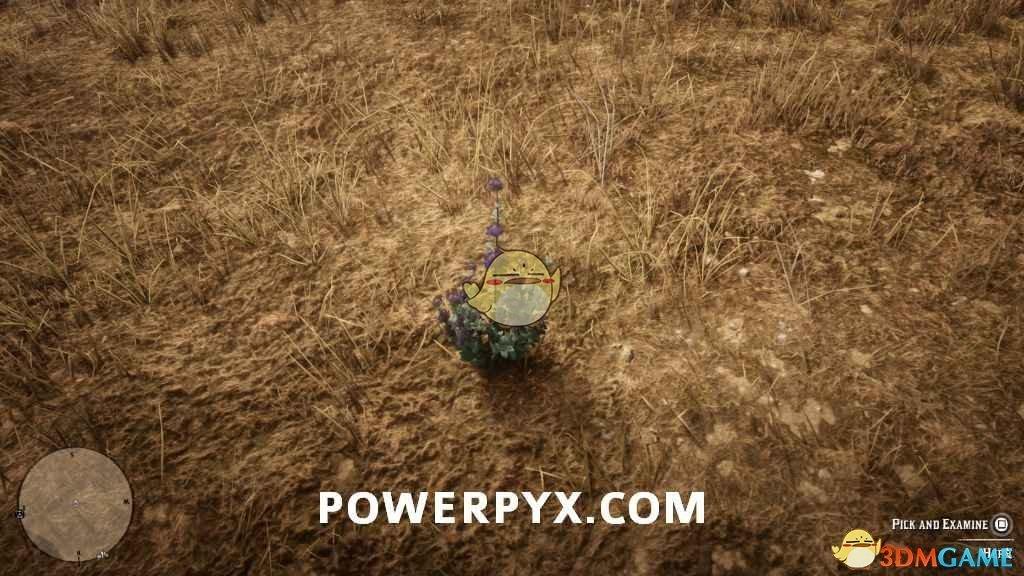 《荒野大镖客2》沙漠鼠尾草采集位置介绍