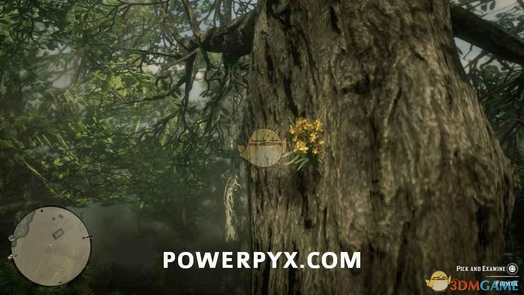 《荒野大镖客2》全异宝植物采集位置一览
