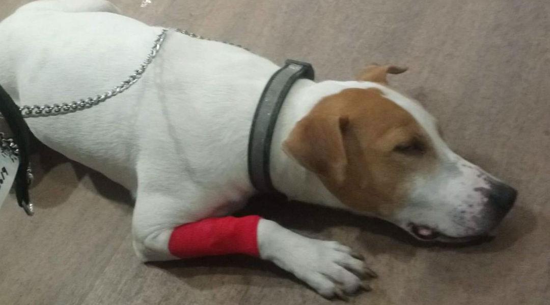 狗子误食任天堂游戏卡带 被紧急抬进手术室