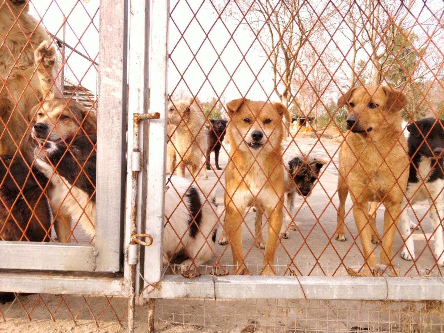這家動物保護組織竟敢硬剛任天堂最強法務部!