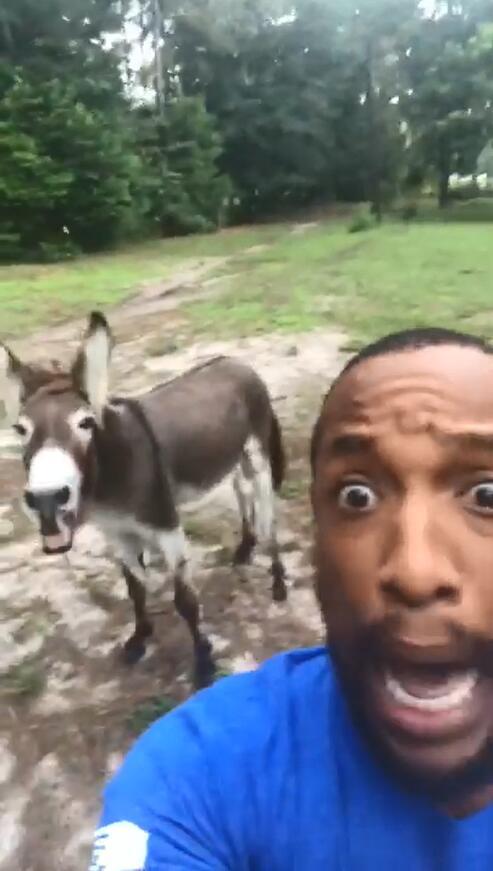 令人捧腹!黑人小哥和驴子深情合唱《狮子王》片头曲