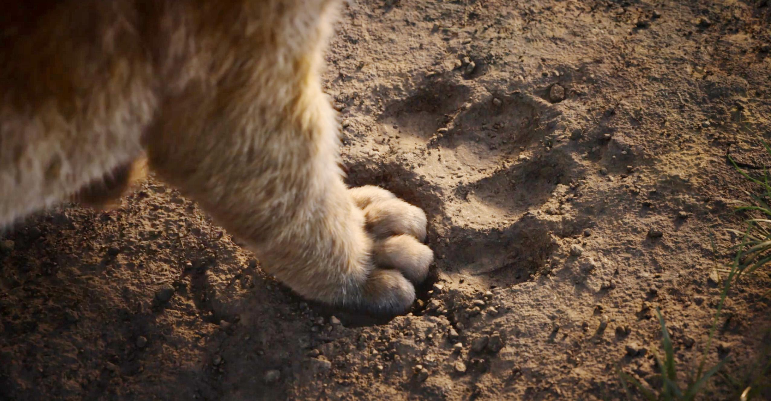 传奇音乐人埃尔顿·约翰:《新狮子王》令我非常失望