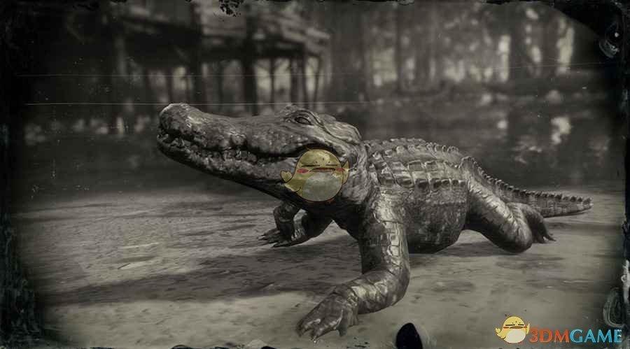 《荒野大镖客2》美国短吻鳄(小)图鉴一览