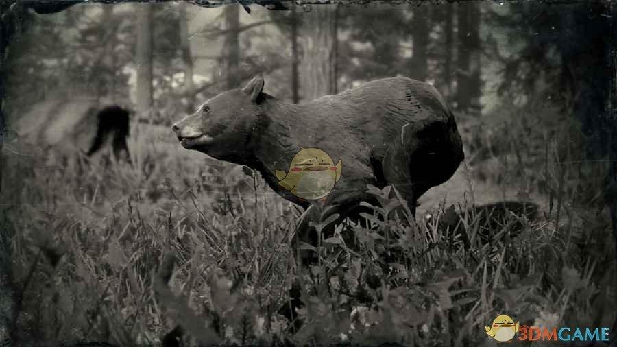 《荒野大镖客2》美洲黑熊图鉴一览