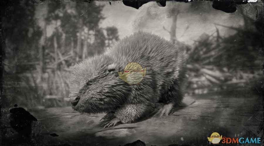《荒野大镖客2》北美河狸图鉴一览