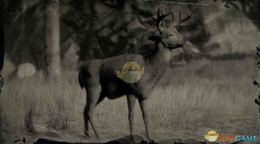《荒野大镖客2》白尾公鹿图鉴一览