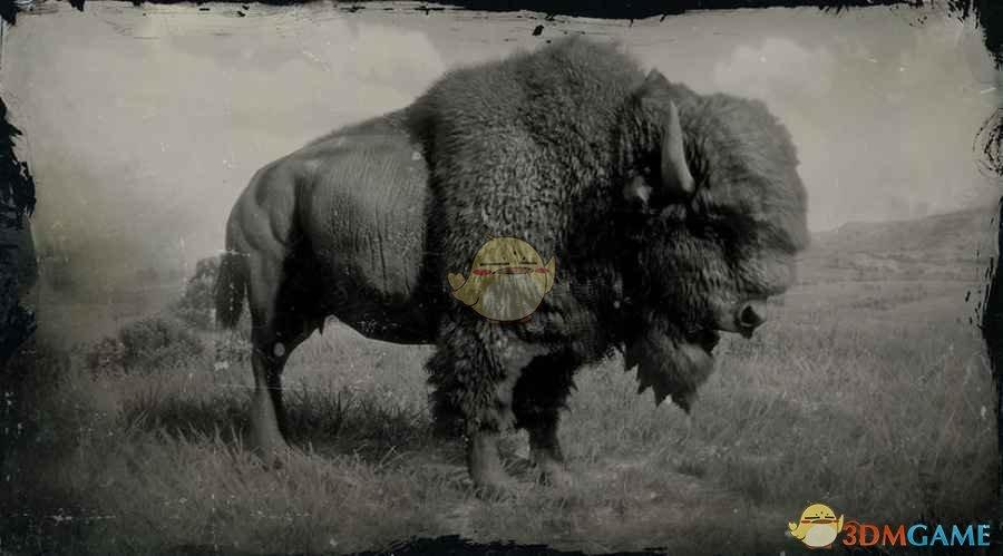 《荒野大镖客2》美洲野牛图鉴一览