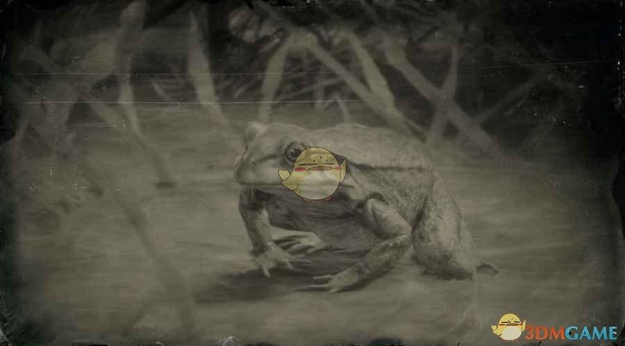 《荒野大镖客2》美国牛蛙图鉴一览