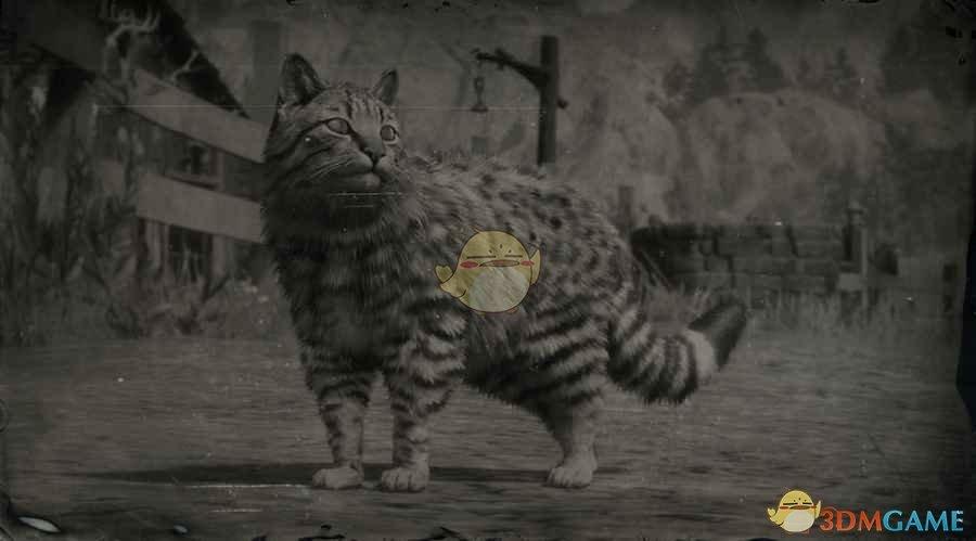 《荒野大镖客2》美国家猫图鉴一览