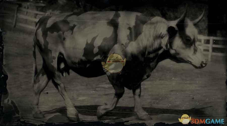 《荒野大镖客2》佛罗里达奶牛图鉴一览