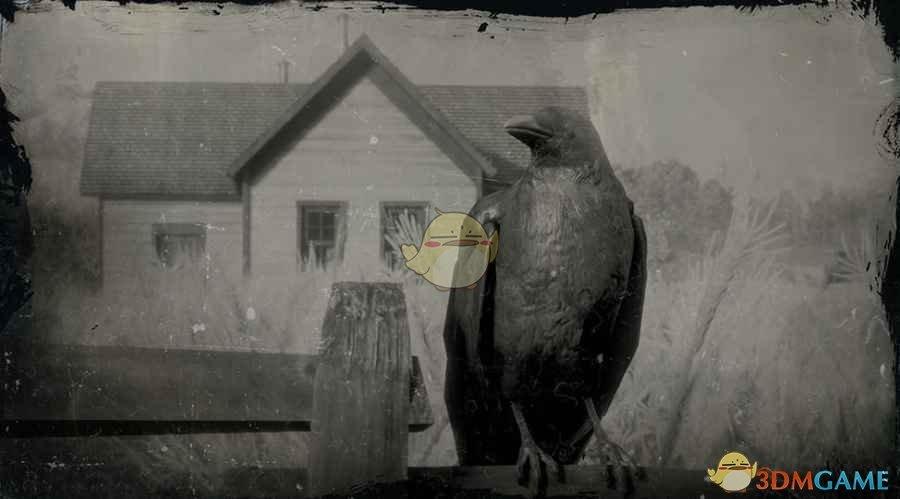 《荒野大镖客2》美洲乌鸦图鉴一览