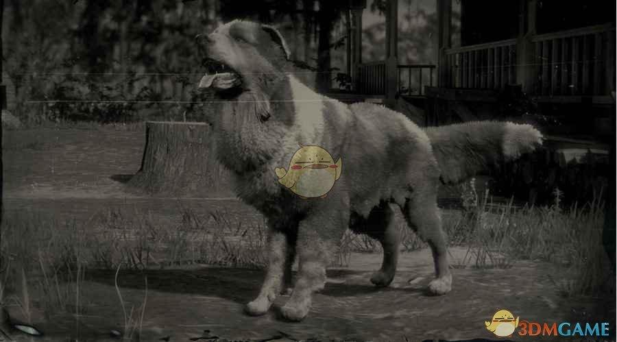 《荒野大镖客2》边境牧羊犬图鉴一览