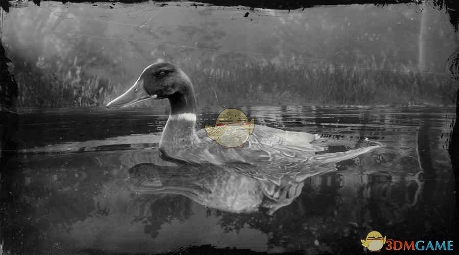 《荒野大镖客2》绿头鸭图鉴一览